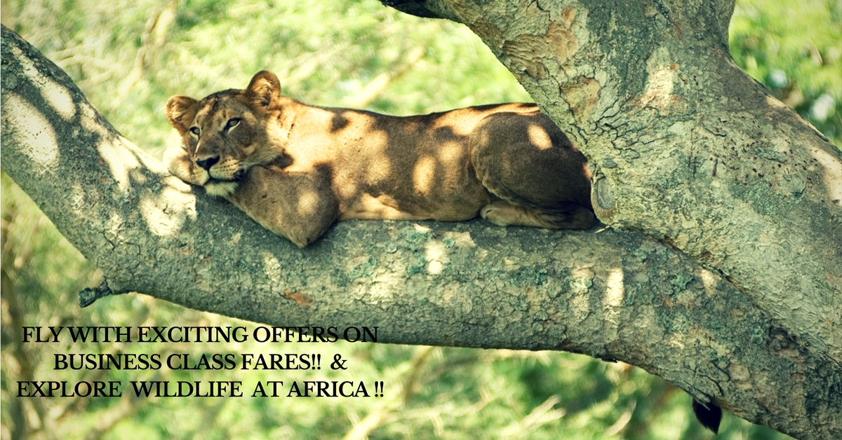 Enjoy Safari with exciting offers on Business class fares!!