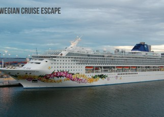 cruise offers